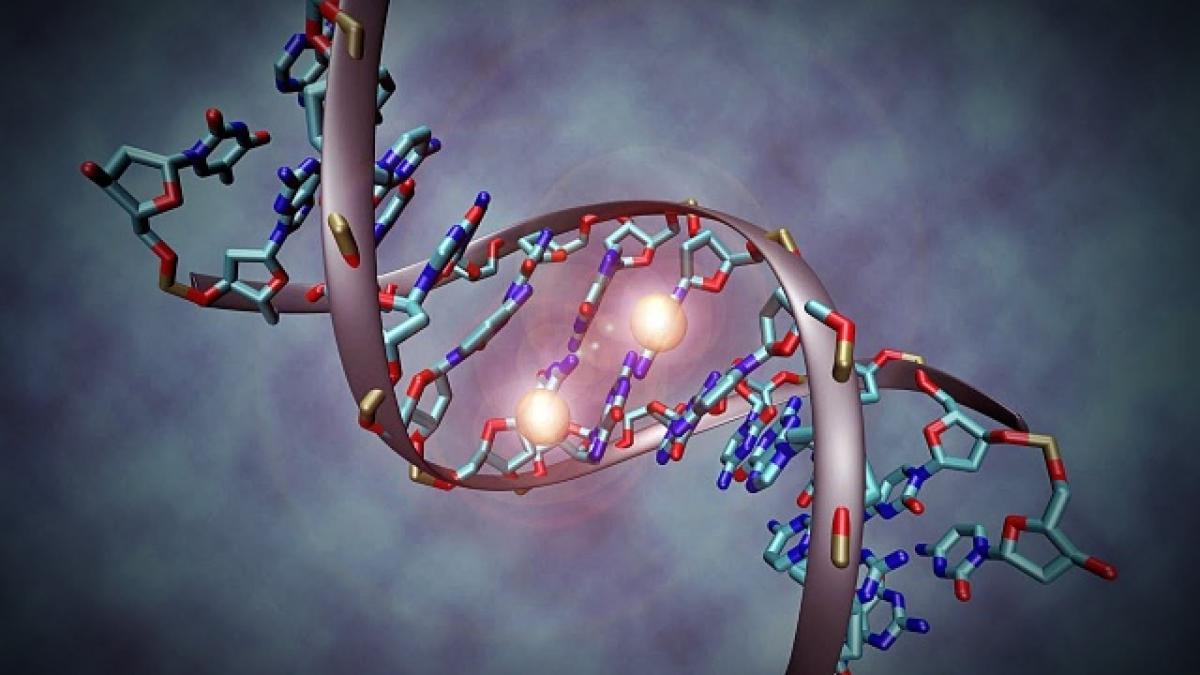 Is genetisch verwantschap belangrijk?